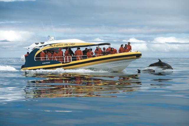 Delfinbegleitung