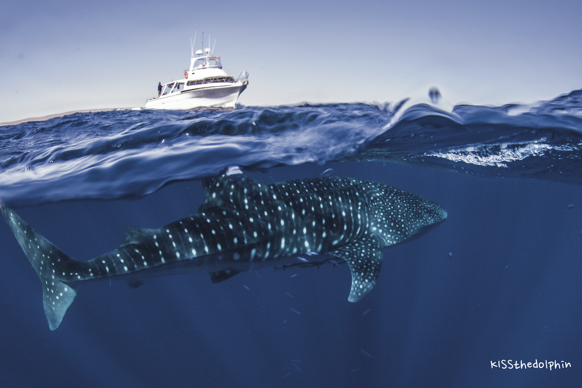 Am Ningaloo Reef ©KISSthedolphin
