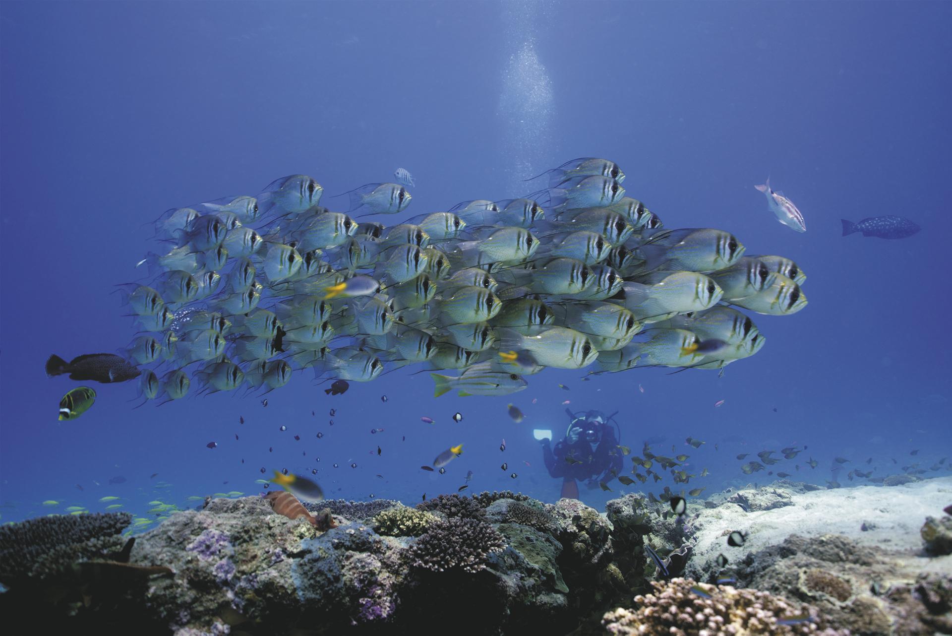 Muiron Islands Unterwasserwelt ©Scott Plume