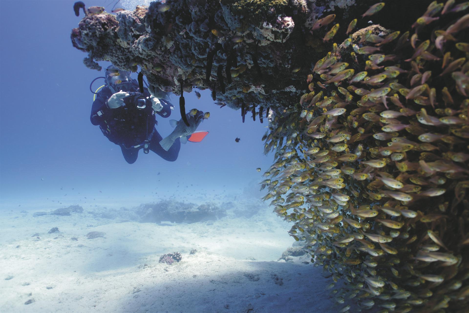 Am Ningaloo Reef ©Scott Plume