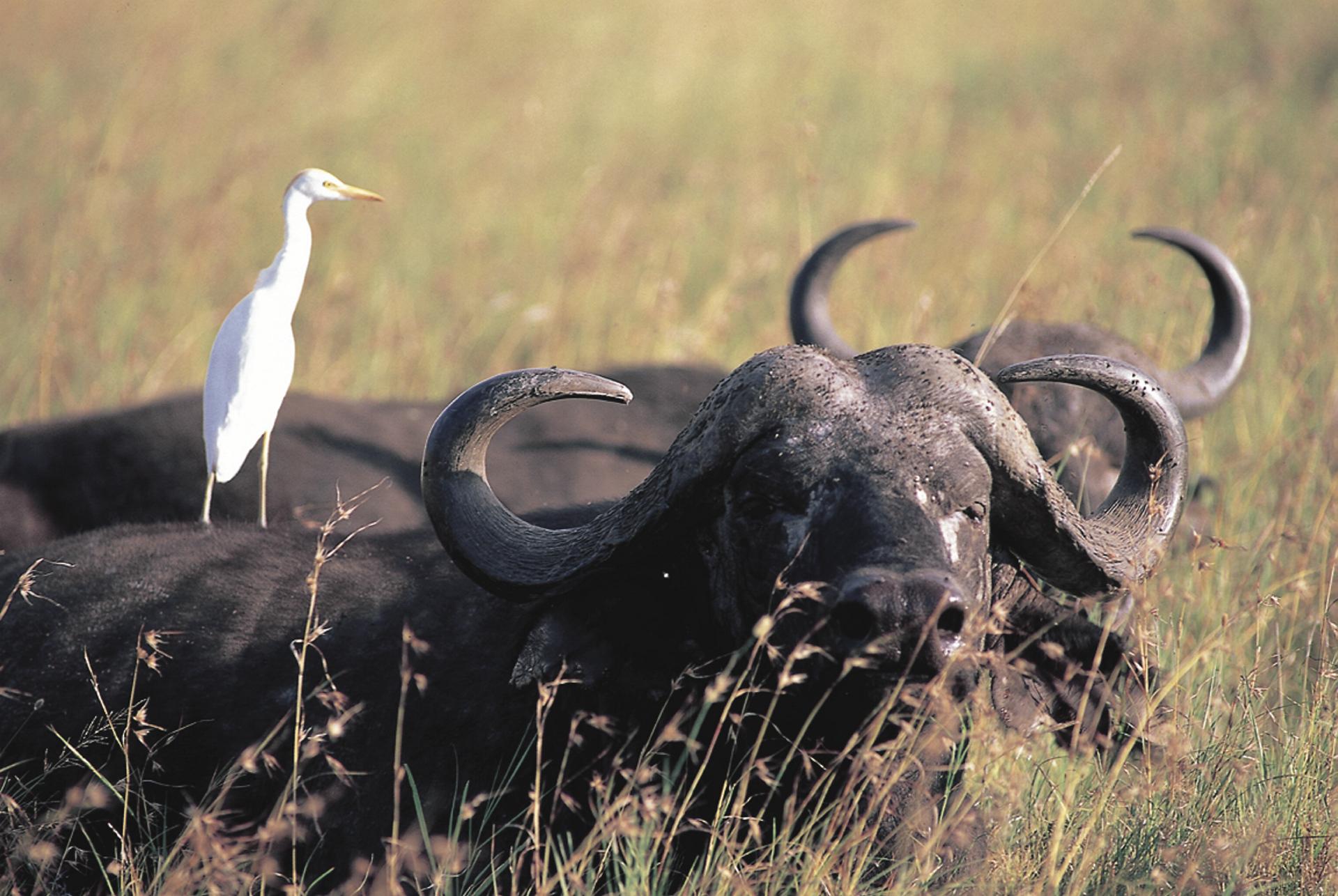 © Kenya Tourism Board; In Gesellschaft