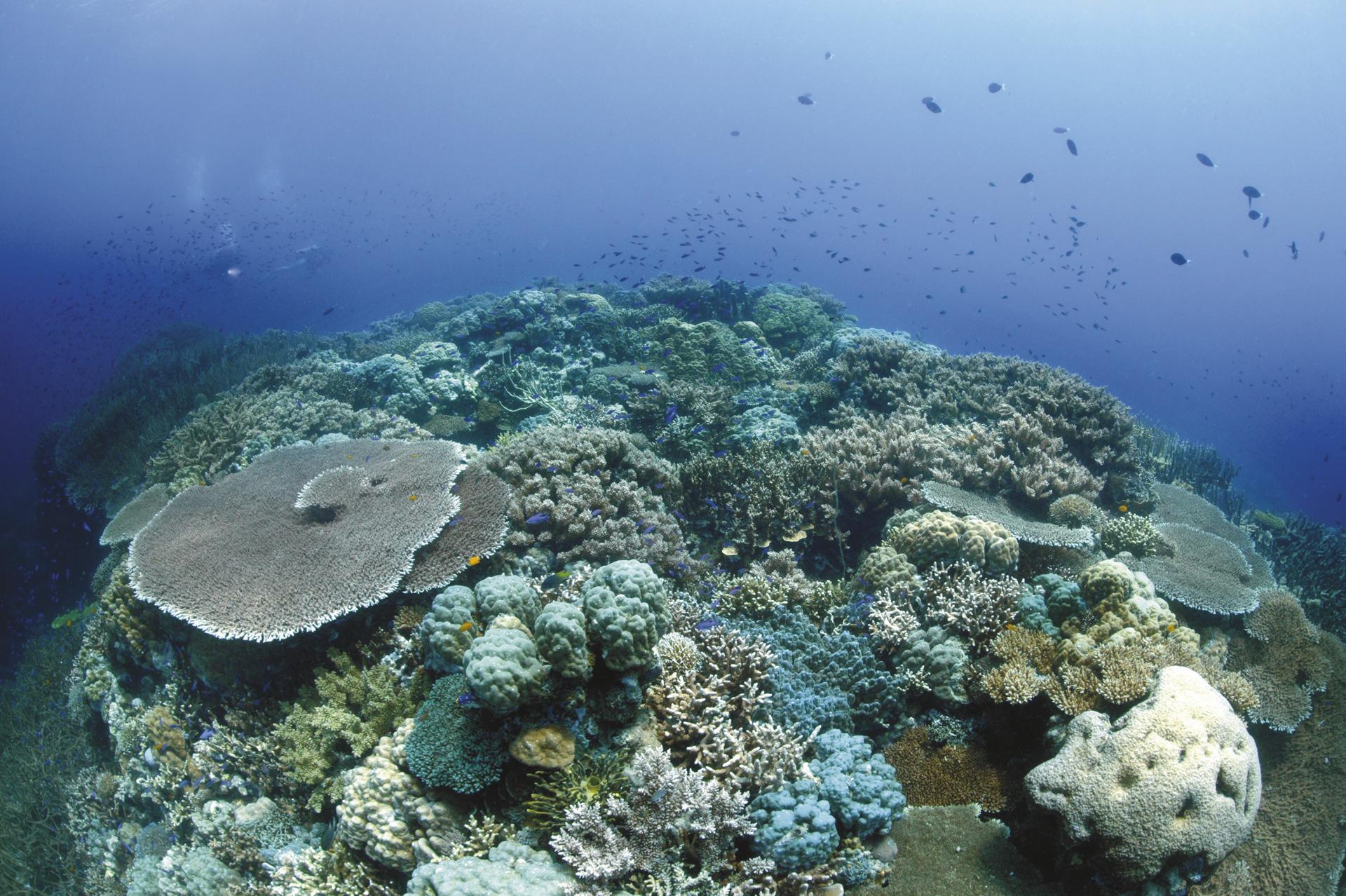 Tolles Korallenriff