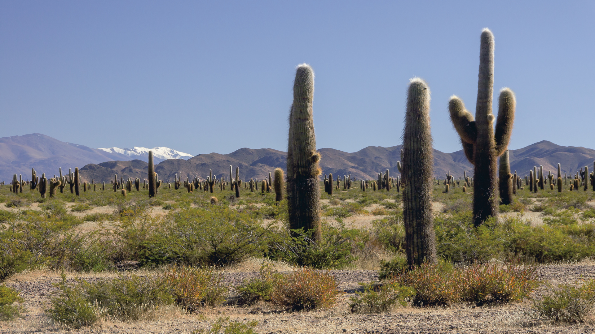 Nationalpark Los Cardones