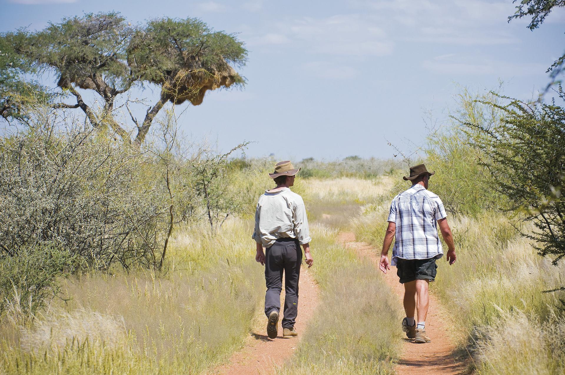 Zu Fuß die Kalahari erleben