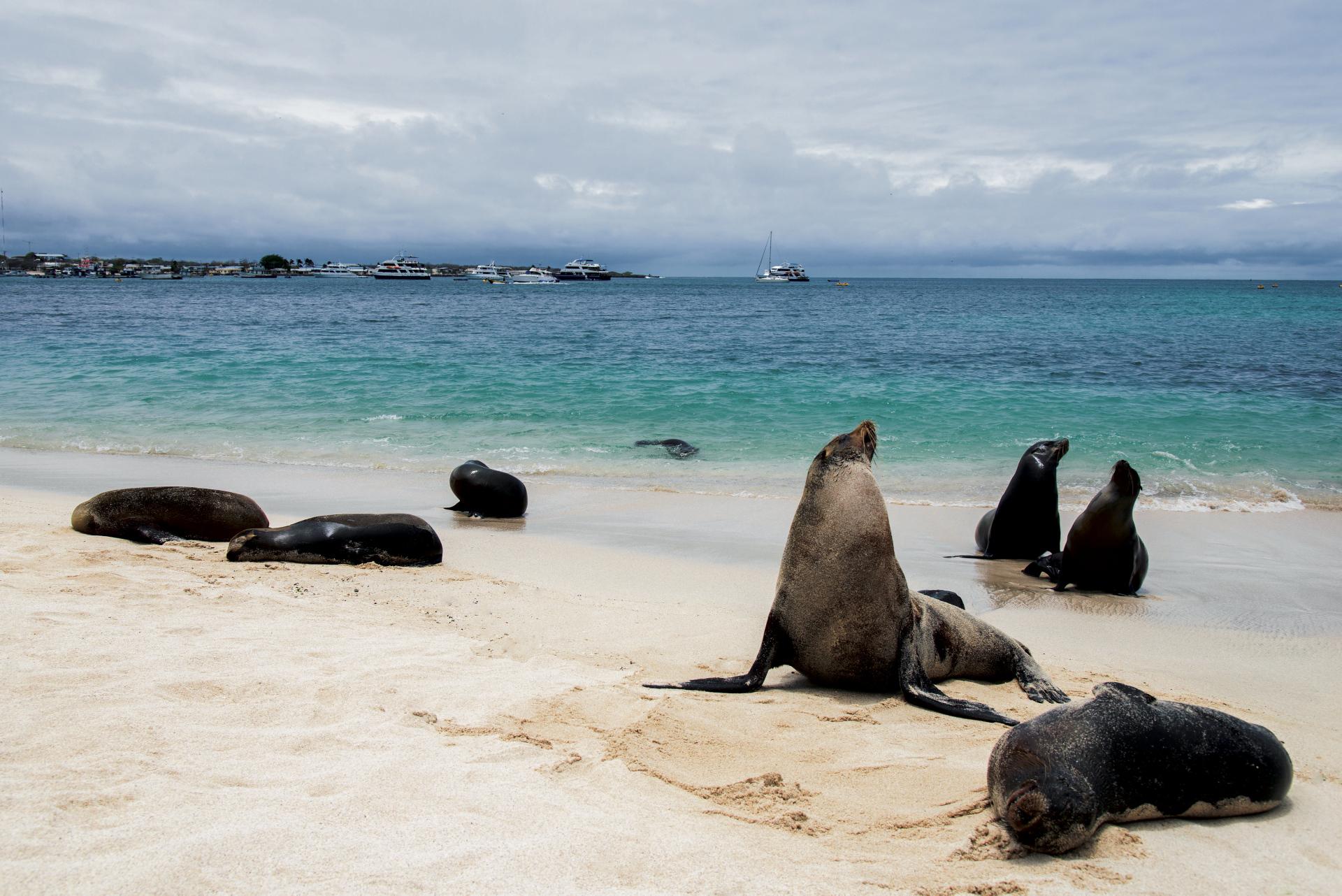 Landgang mit Seelöwen