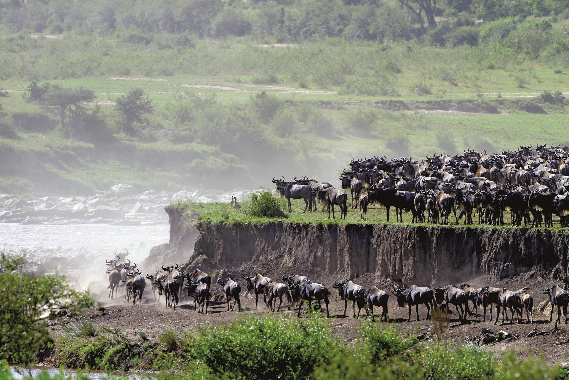 ©Jörg Ehrlich, DIAMIR Erlebnisreisen; Die große Migration am Mara Fluss