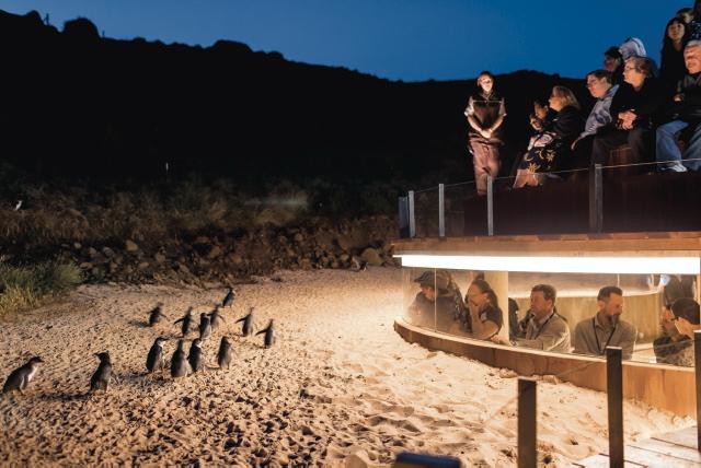 Penguins Plus Plattform ©Warren Reed