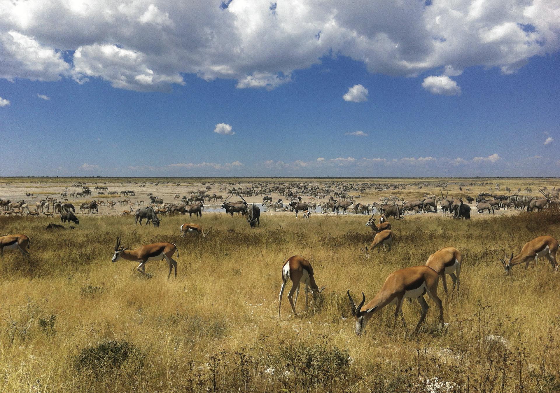 Reiche Tierwelt im Etosha Nationalpark