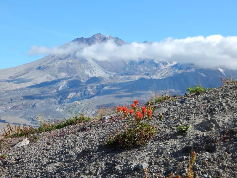 Mount St. Helens, Washington State - ©TravelDreamWest