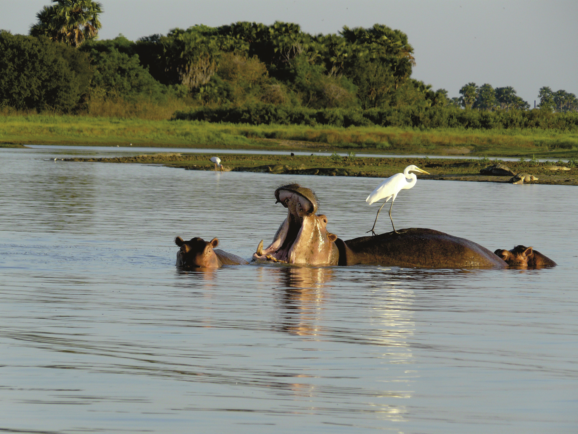 © Heiko Schierz; Im Selous Game Reserve