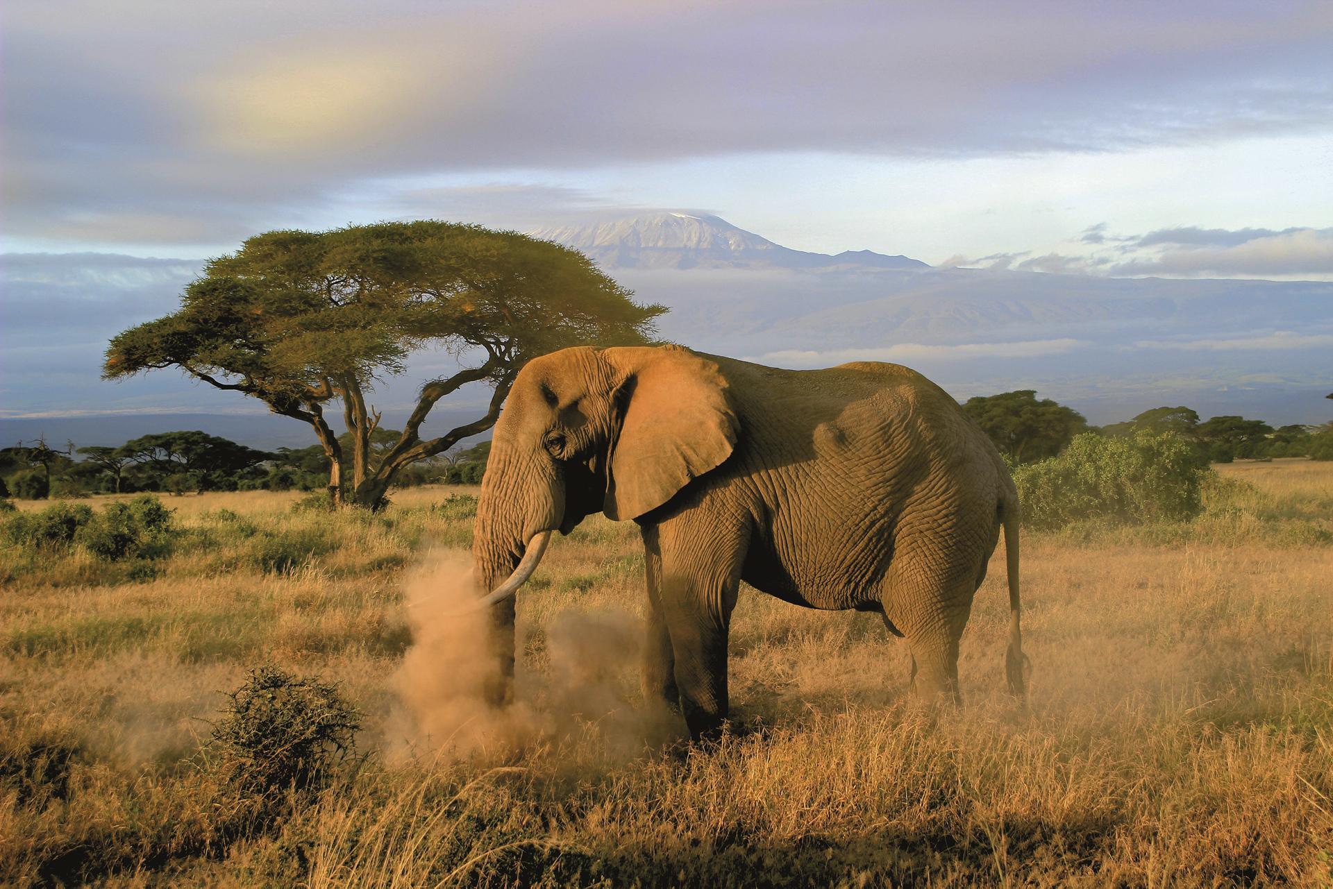 ©Olaf Schau, DIAMIR Erlebnisreisen; Im Amboseli Nationalpark