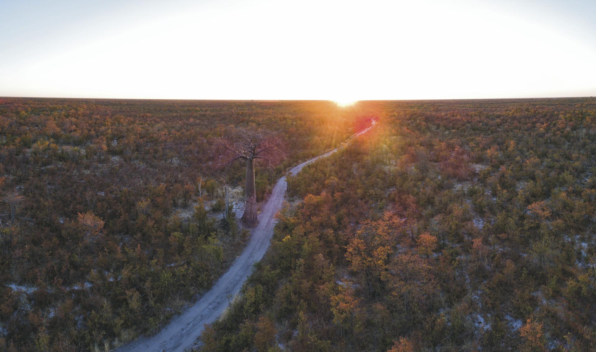 Sonnenuntergang im Moremi Game Reservat
