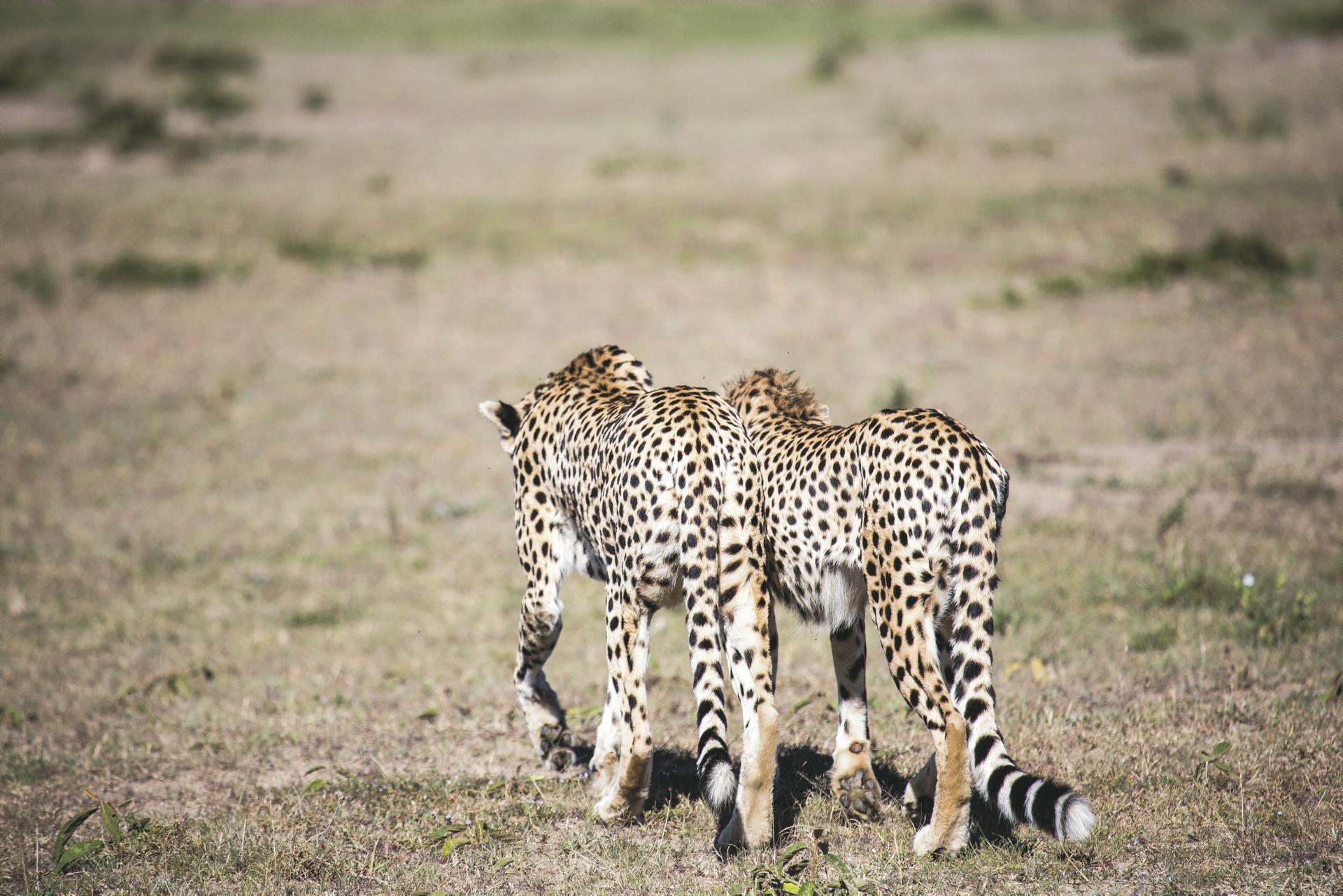 ©Lars Eichapfel, DIAMIR; Die schnellen Jäger mal langsam