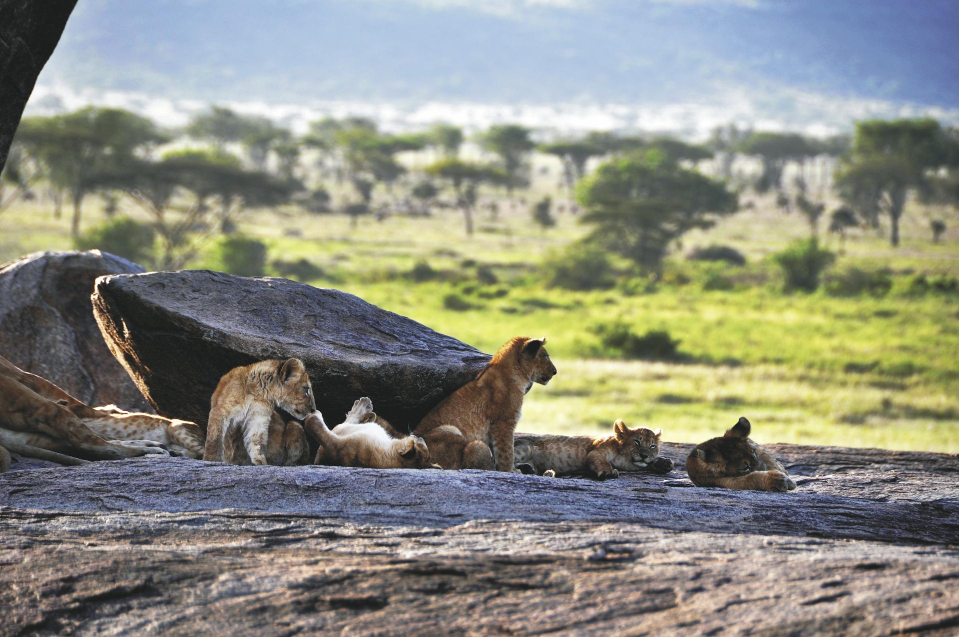 ©Tanzania-Experience; Auf dem Aussichtsdeck