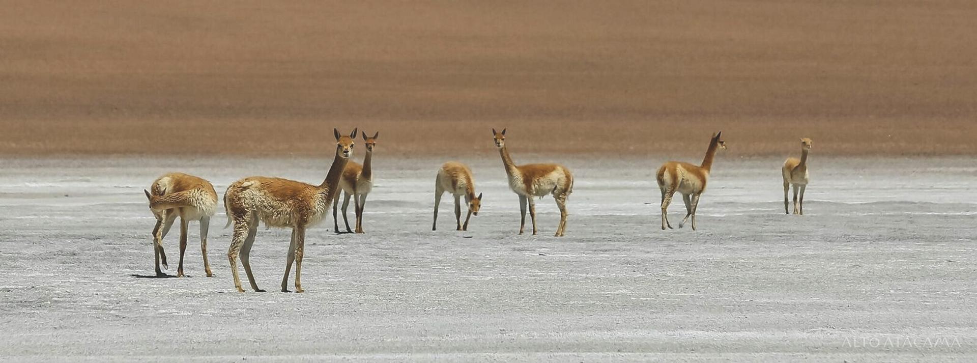 Ausflug im Altiplano