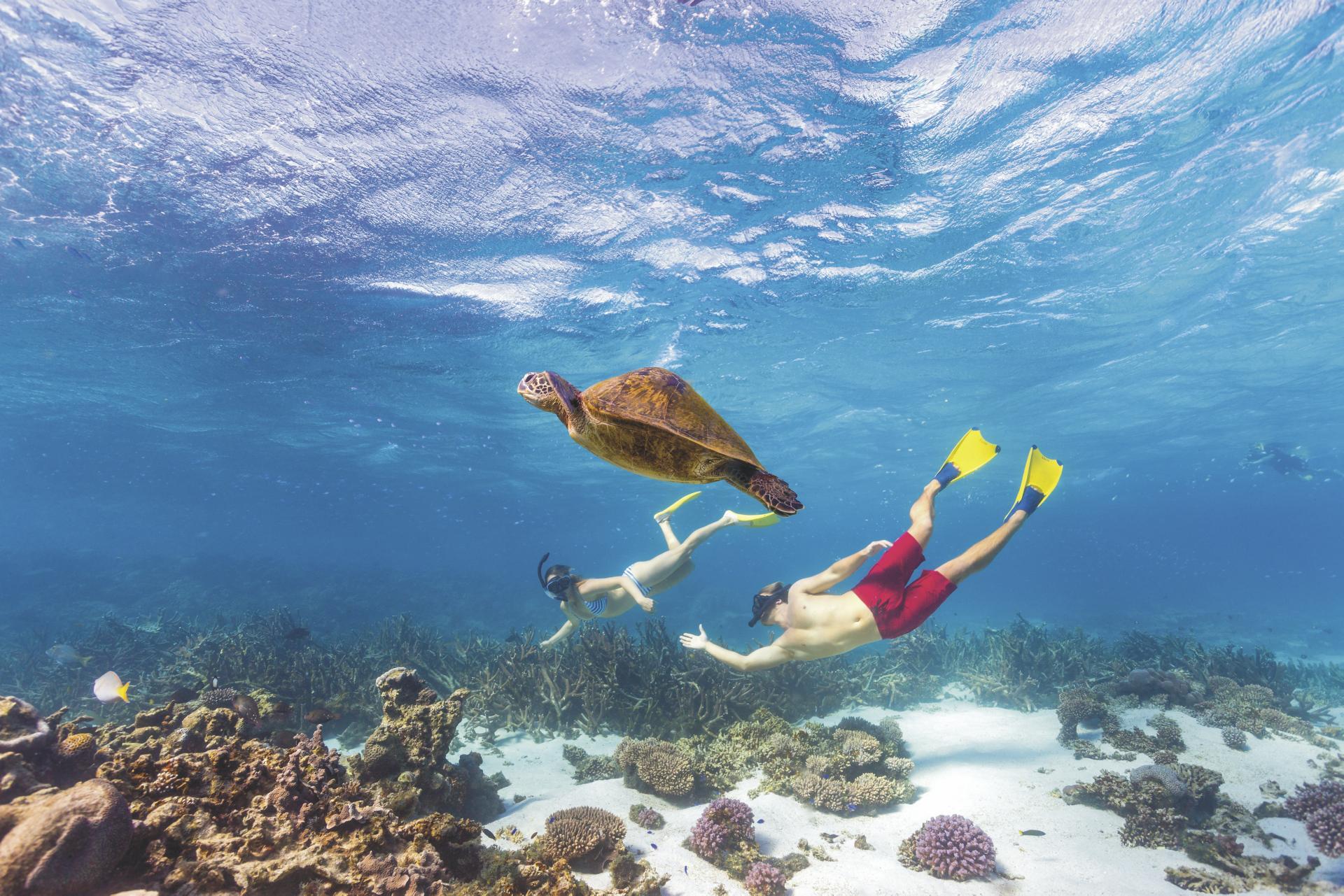 Schnorcheln am Ningaloo Reef ©Tourism Western Australia