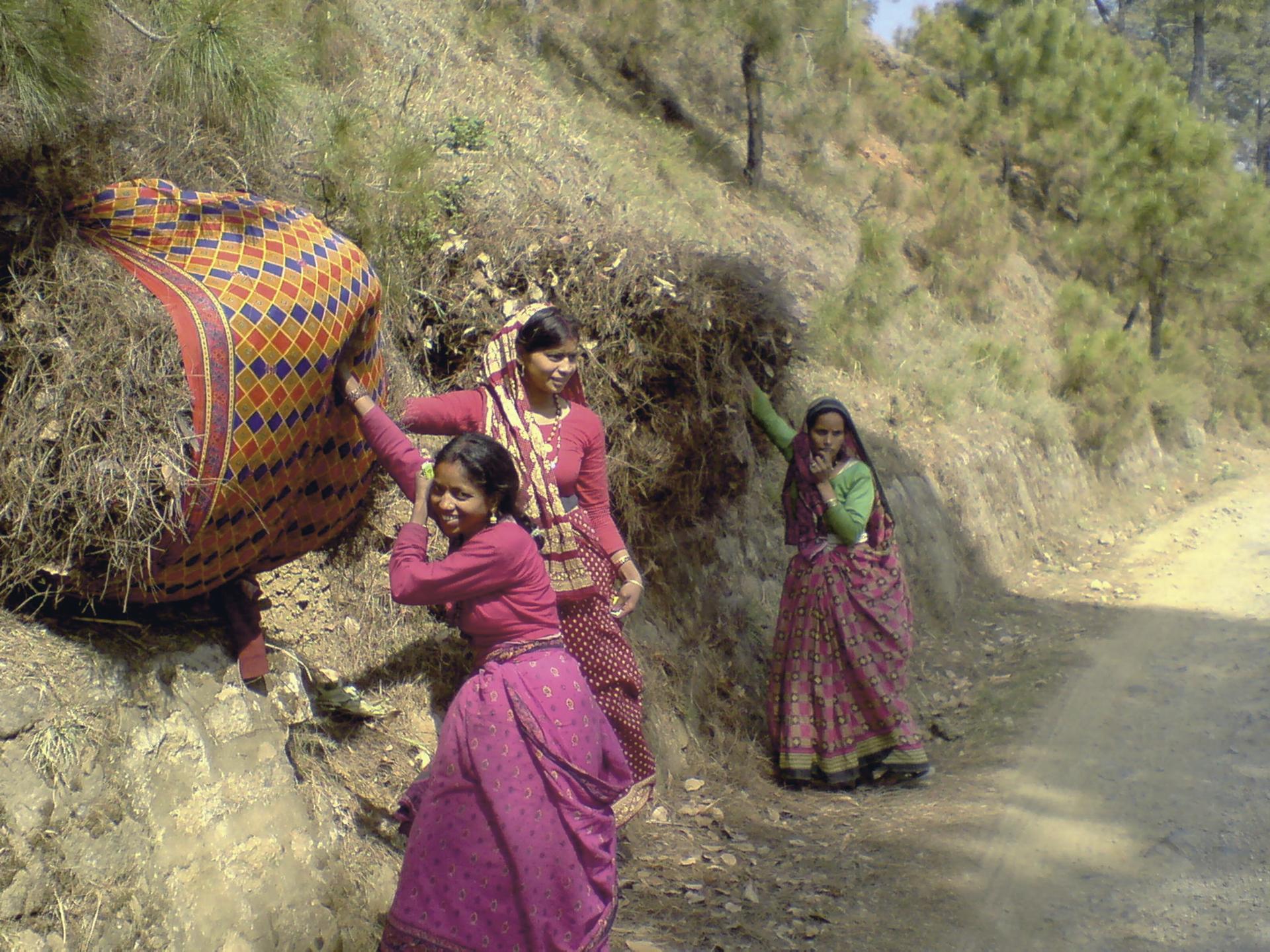 Indische Frauen bei der Grasernte