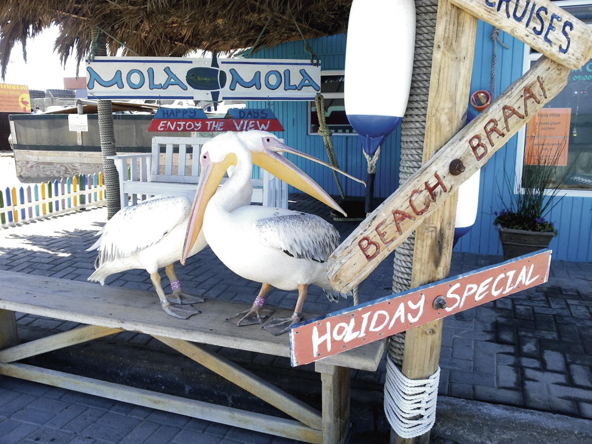 Pelikane an der Jetty