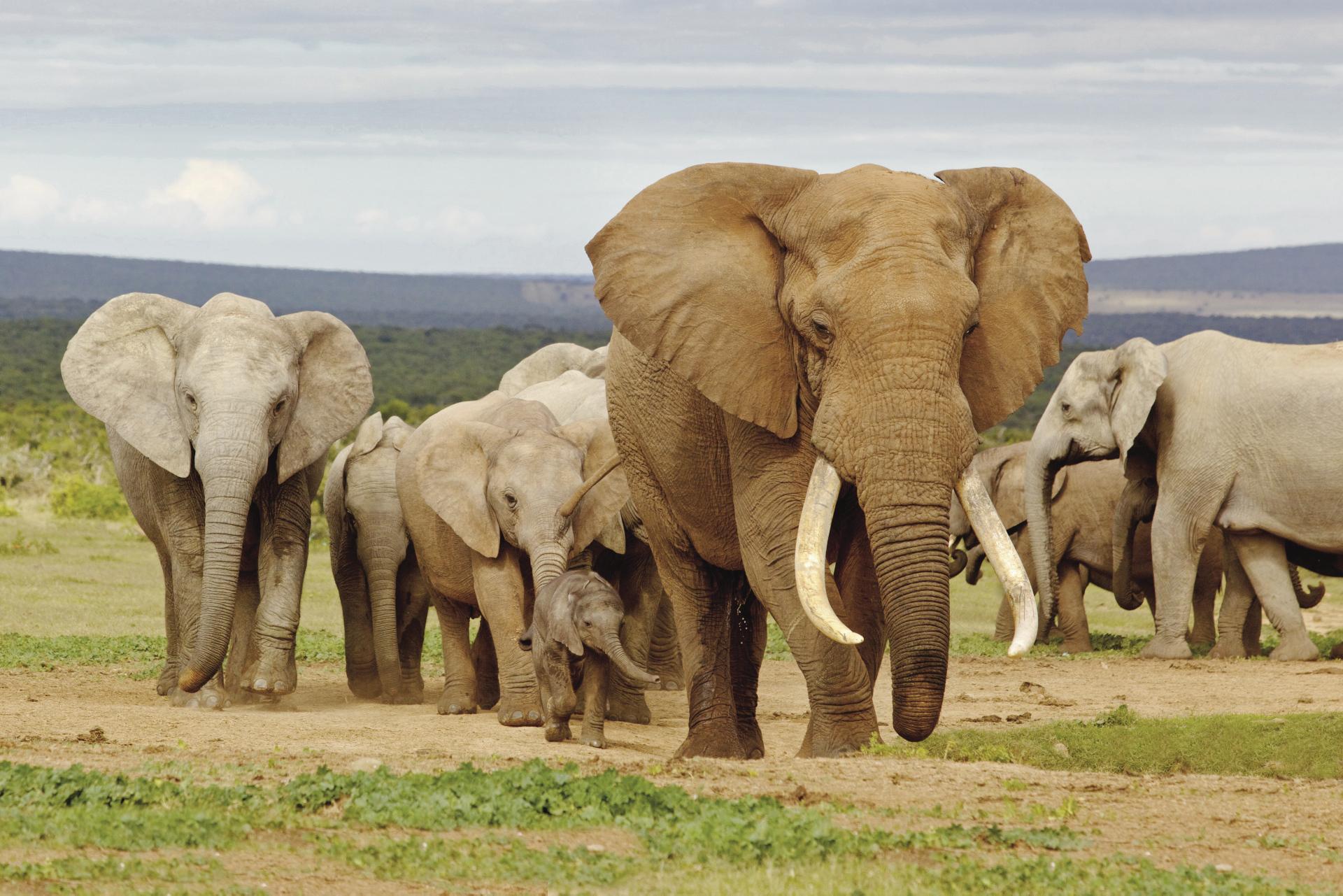 Imposante Elefanten