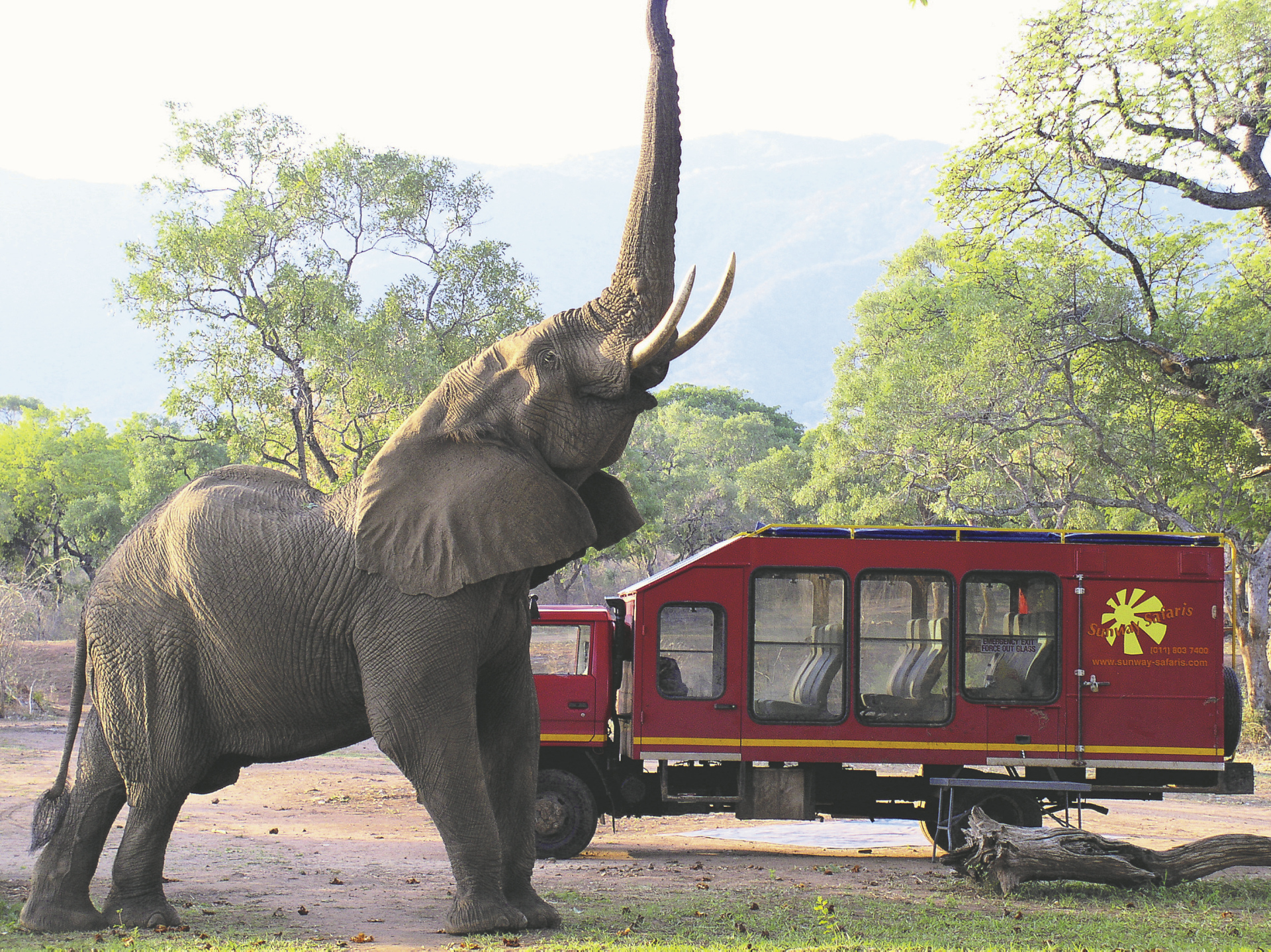 Safari Truck mit Elefant