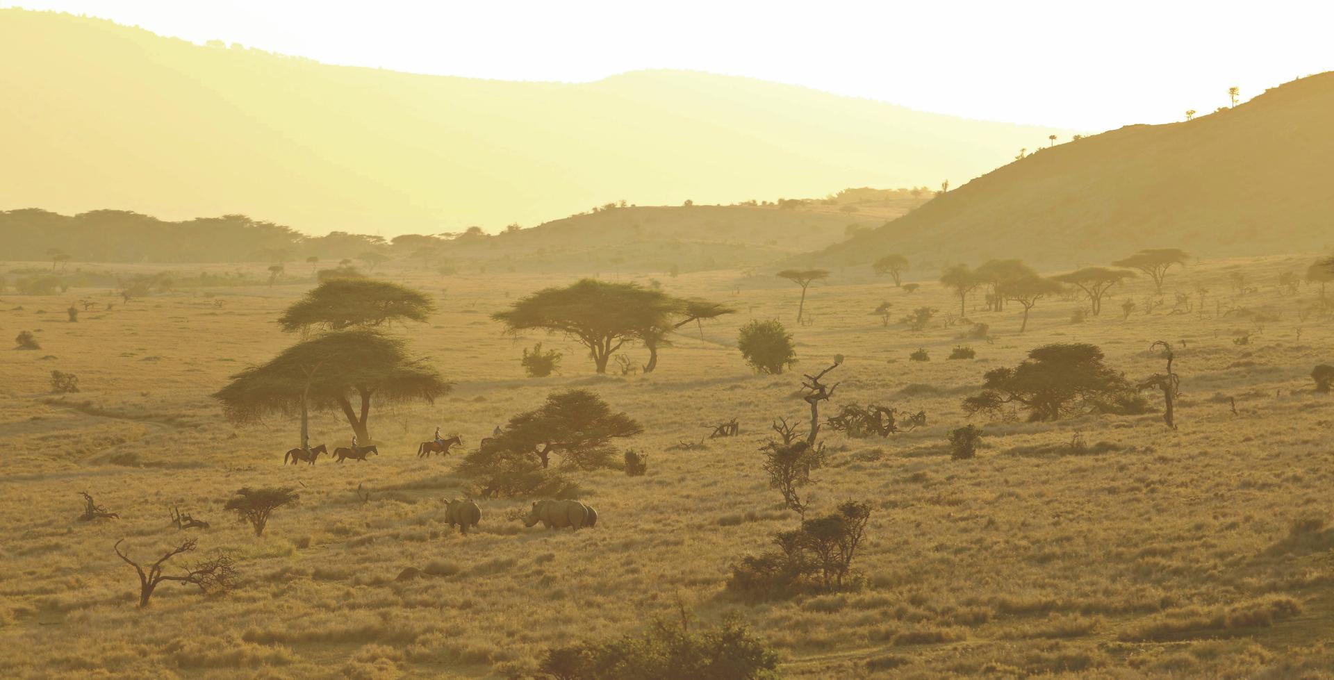Landschaft im Lewa Schutzgebiet