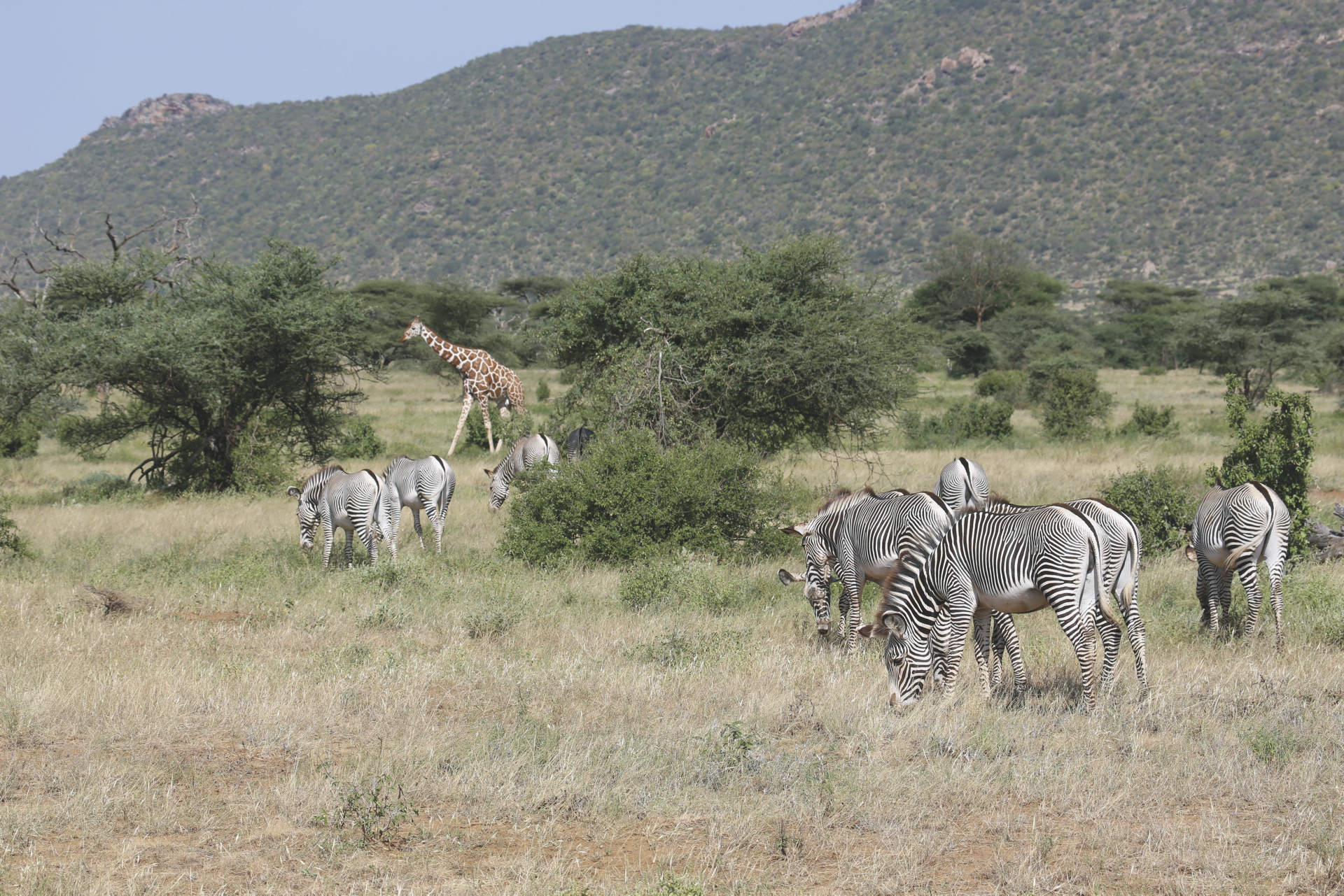 Kenia aus dem Bilderbuch, ©Thomas Kimmel