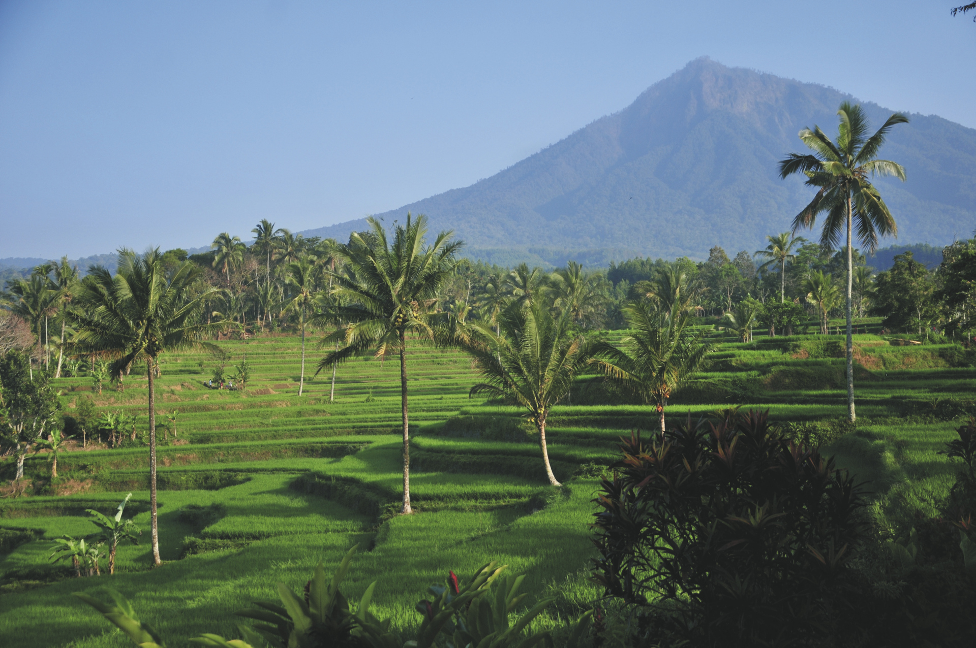 Reisterassen in Java, ©Ministry of Tourism, Republic of Indonesia