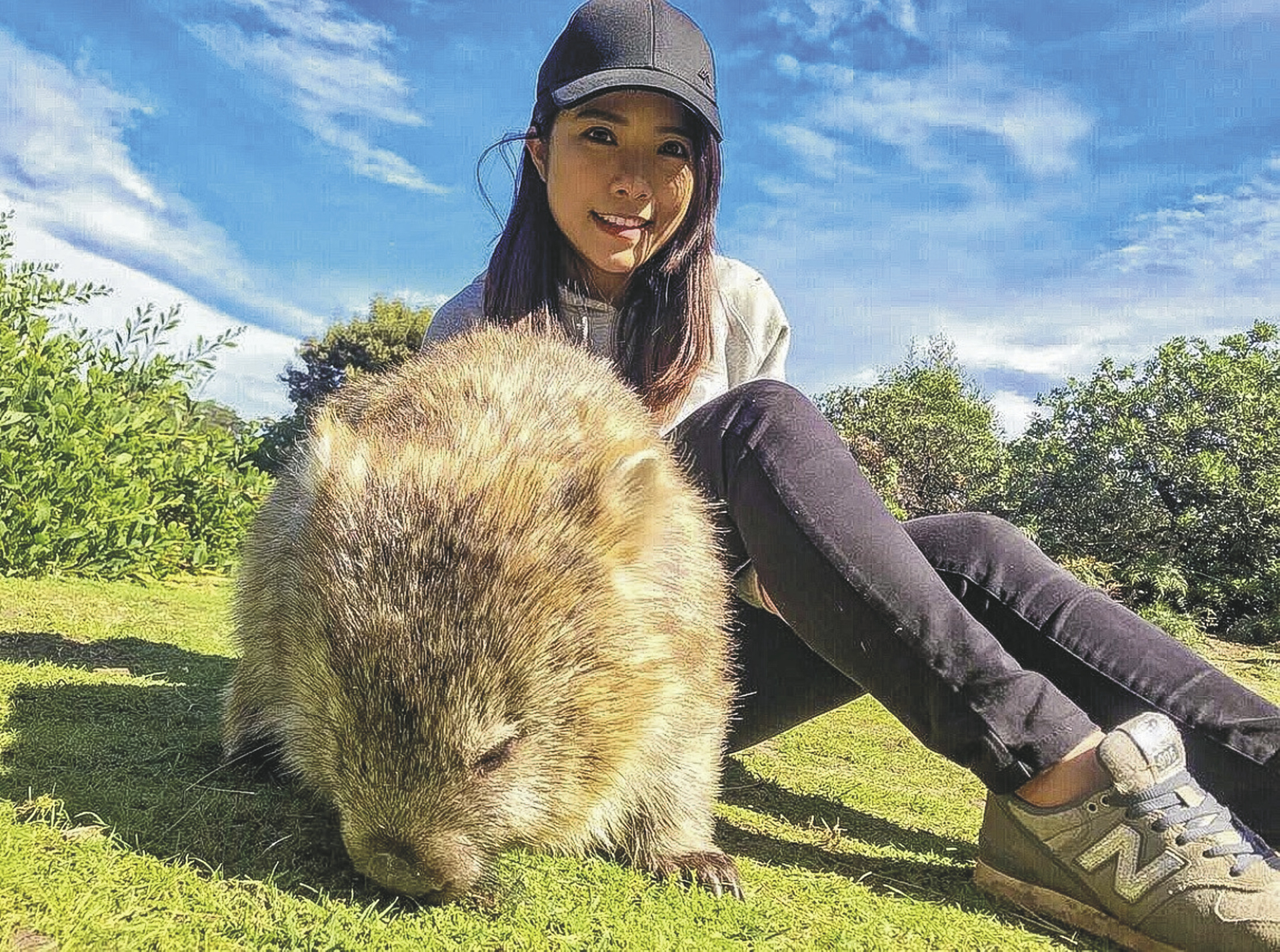 Wombat auf Maria Island