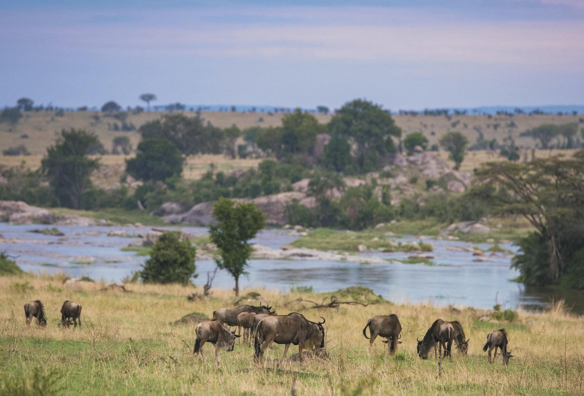 Tierparadies am Mara Fluss, ©Tanganyika Expeditions