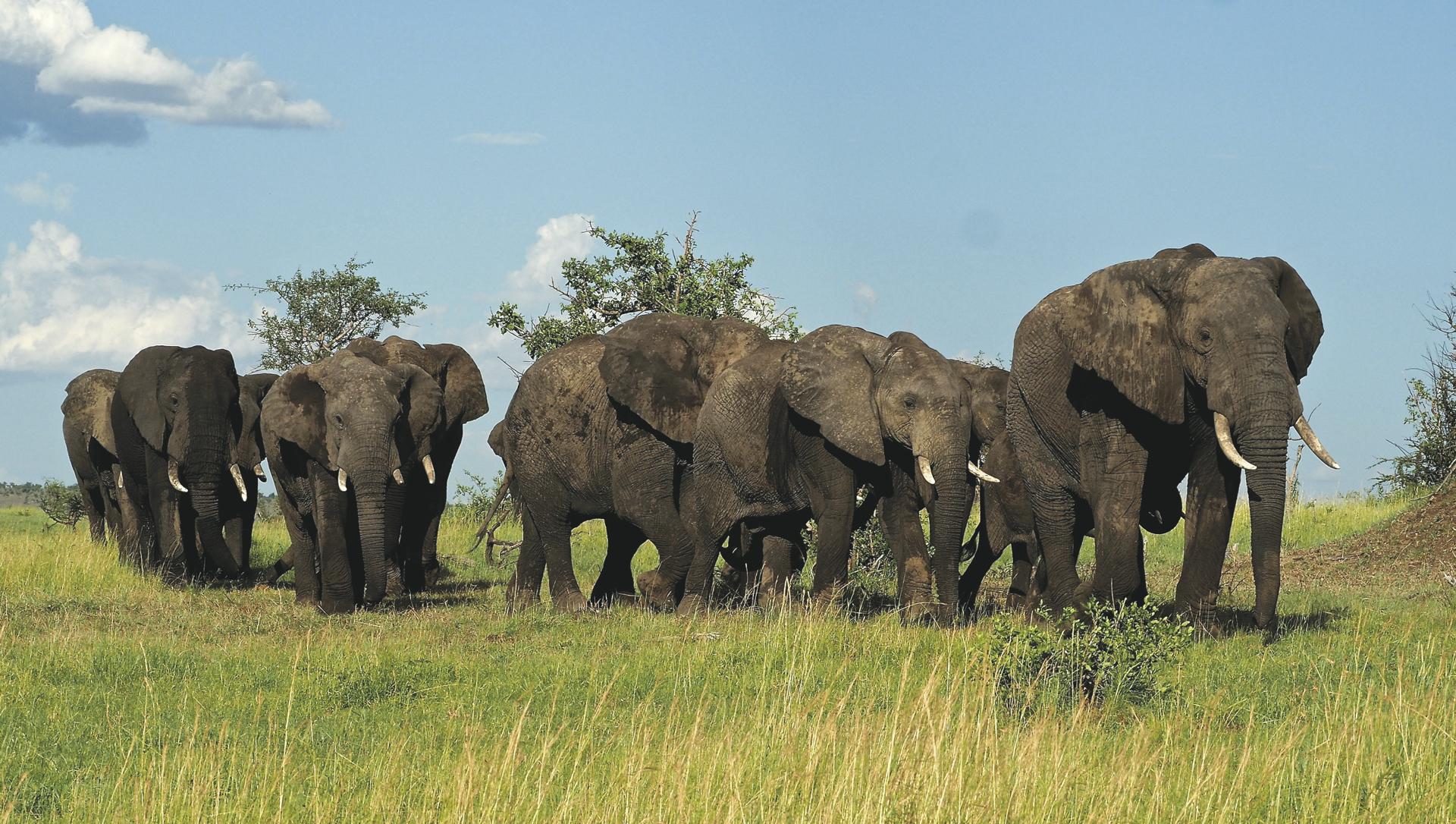 Elefantenherde im Tarangire